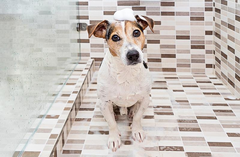 Dog Shower Installers in Essex